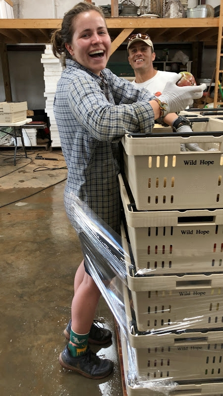 Volunteer Coordinator/Apprentice, Molly Belk, got caught in the plastic when wrapping the CSA shares for delivery.