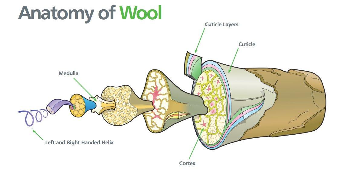 anatomy of wool.jpg