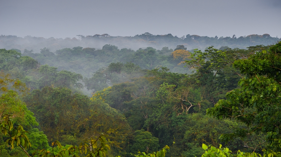 View of the forest canopy at La Selva Biological Station, Costa Rica