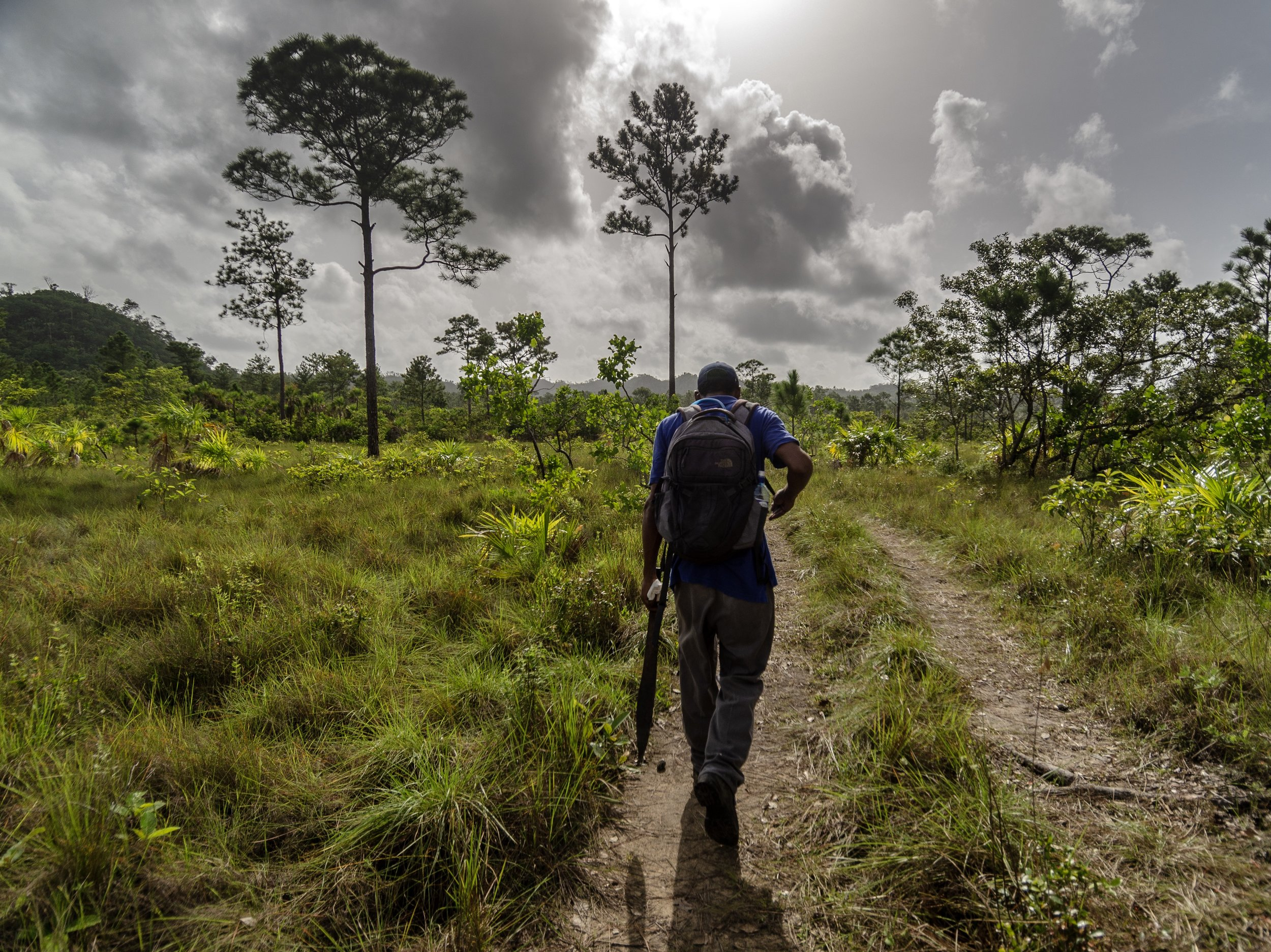 Stevan Renaud leading the way across the savannah on an early morning trek into Runaway Creek to check trail cameras.