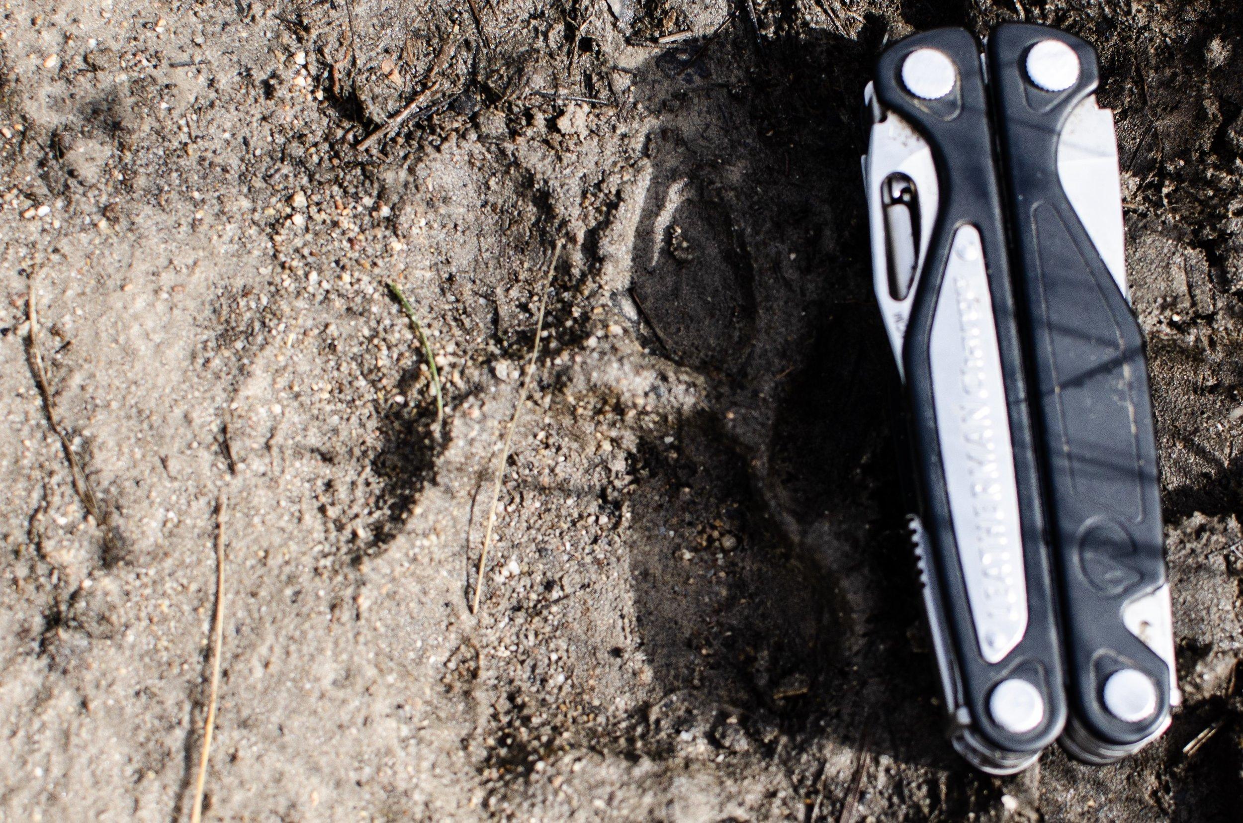 Jaguar footprint in the mud near my hammock.