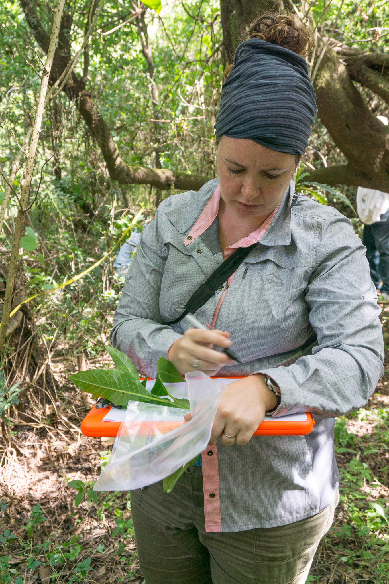 Dr. Carrie Woods collecting leaf samples from a sacred forest.