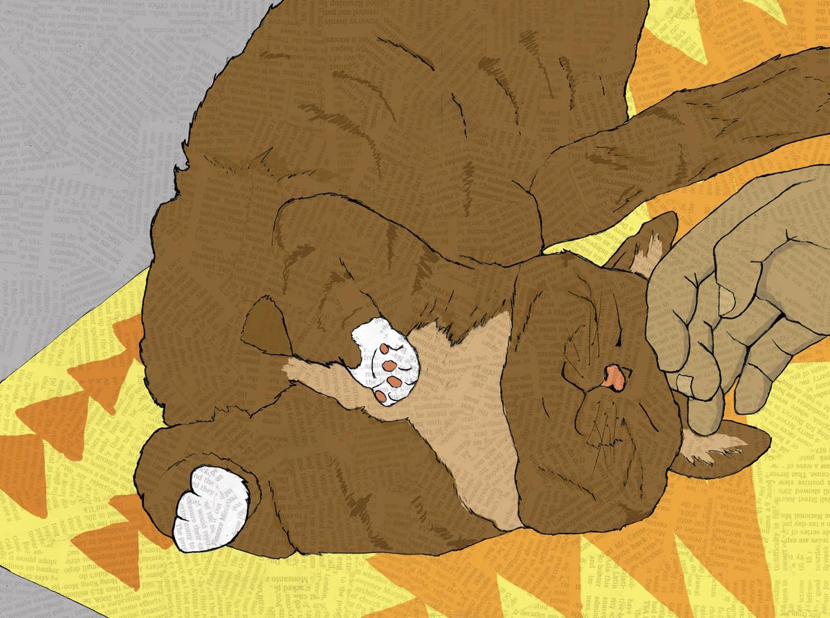 Cat-Petting.jpg