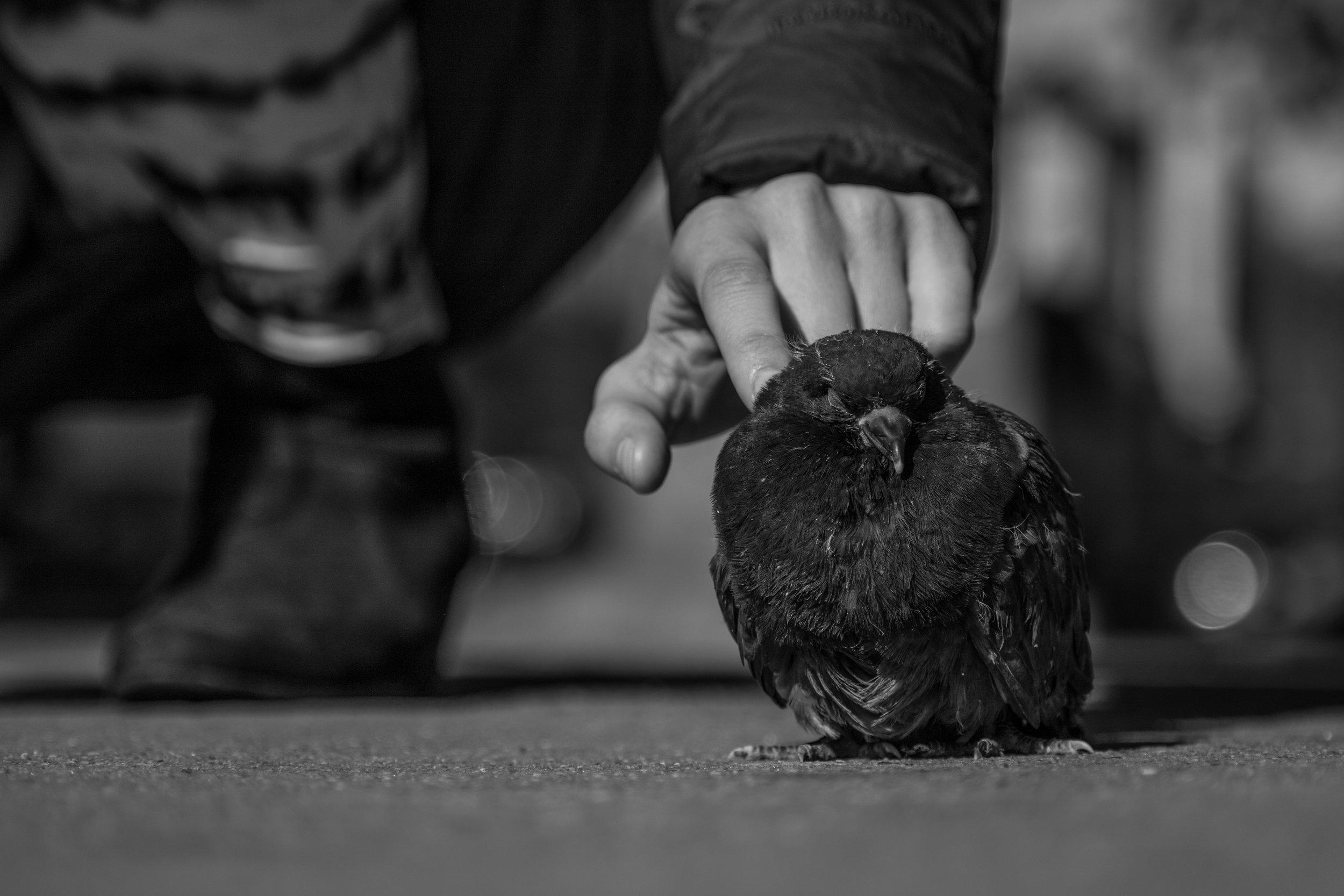 birdfinger.jpg
