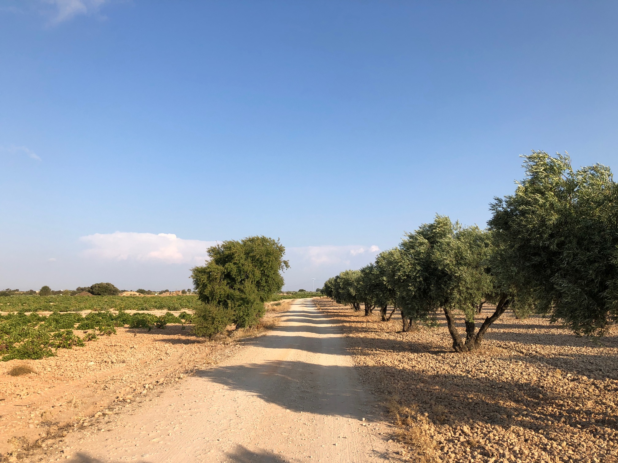 INTENSIVE FARMING ON BOTH SIDES OF THE ROAD