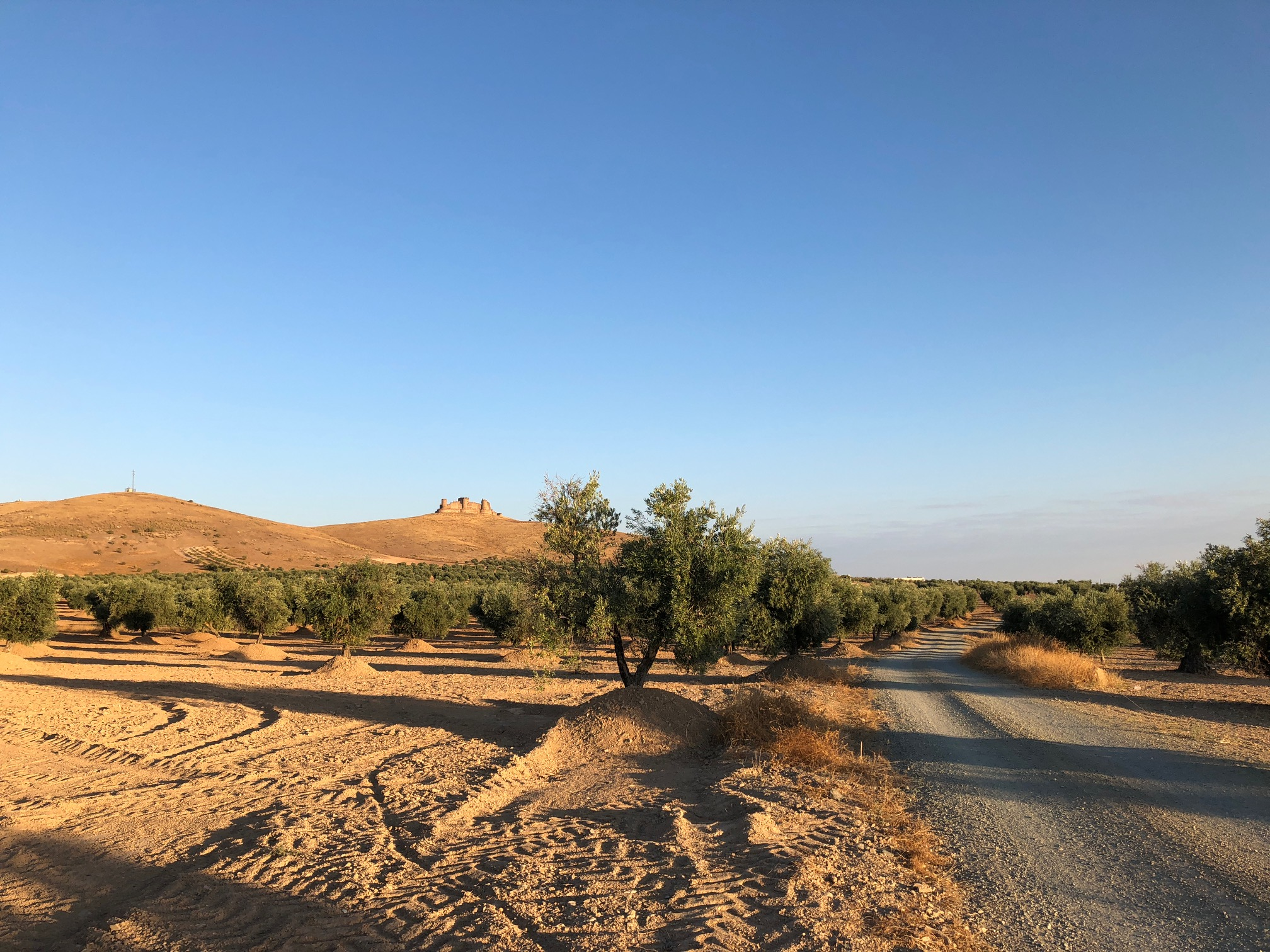 OLIVE GROVES AND THE CASTLE DOMINATED THE SECOND LEG OF THE WALK