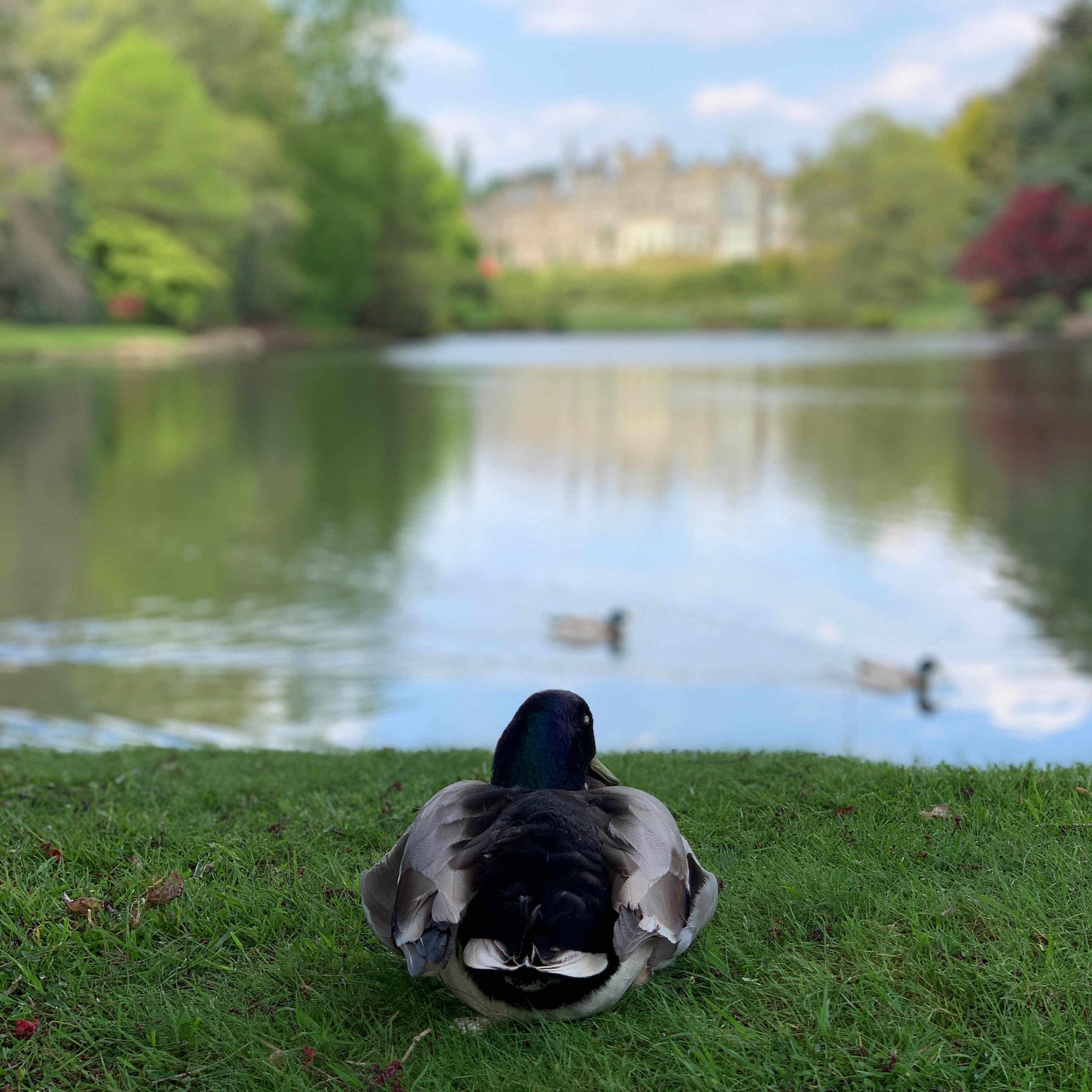 Sheffield Park 9.jpg