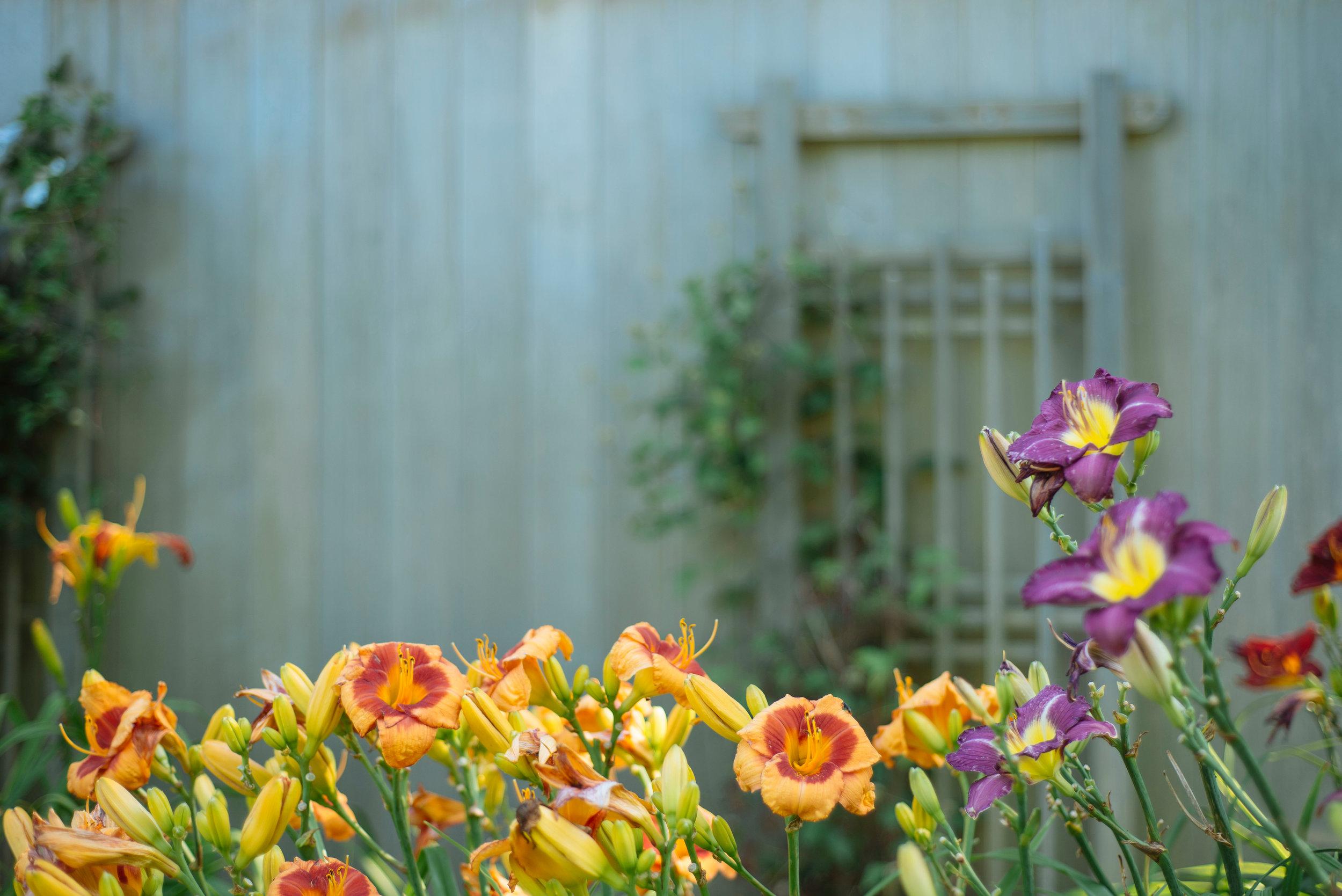 Flowers - This Week's Green Tip - Powe. Snowboards - Burlington, VT