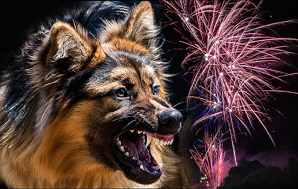 http://picphotos.net/keep-dogs-safe-and-secure-during-fireworks-season/