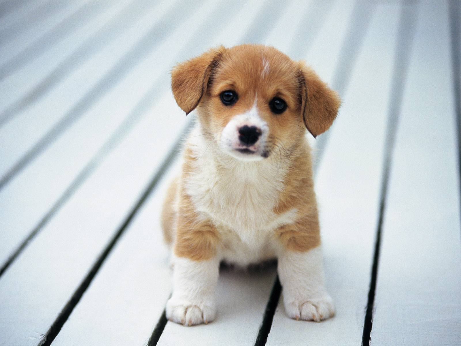 http://stuffpoint.com/dogs/image/338835-dogs-cute-dog.jpg