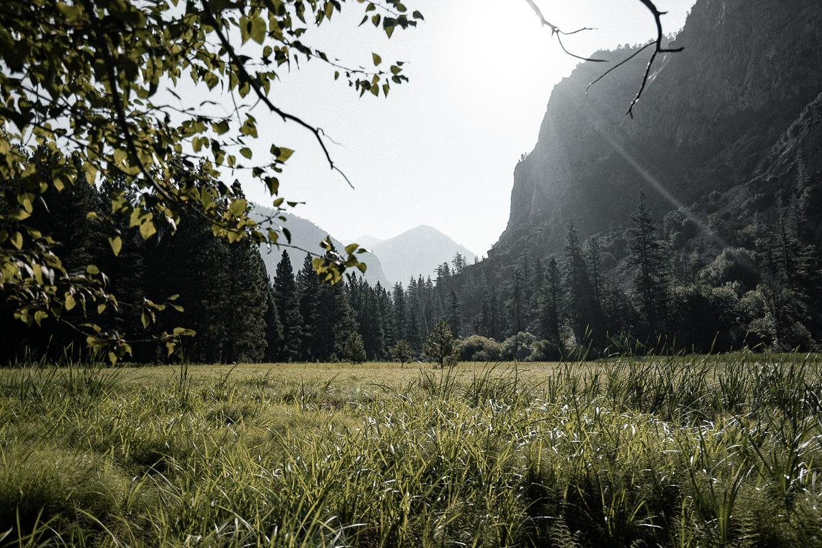 john-sippel-vltrr-sequoia-national-forrest-zumwalt-meadow