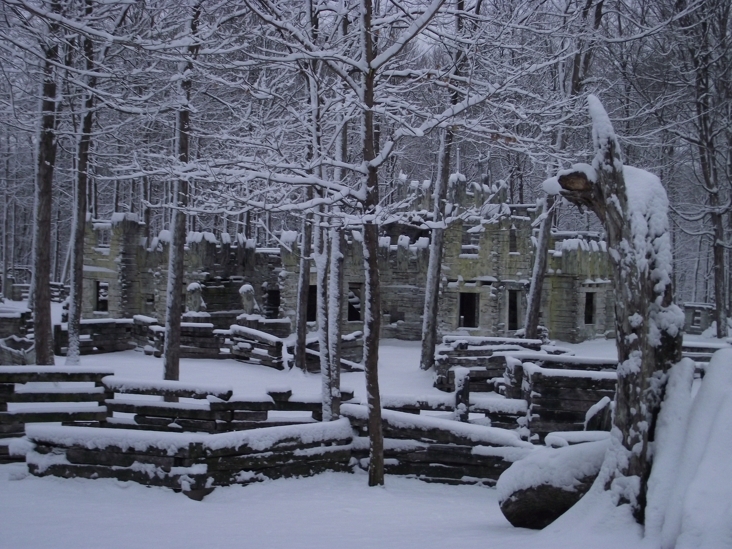 Feb 4 snowfall (6).JPG