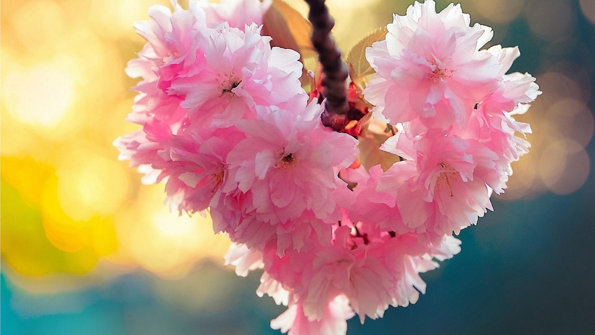 mindful blossom.jpg