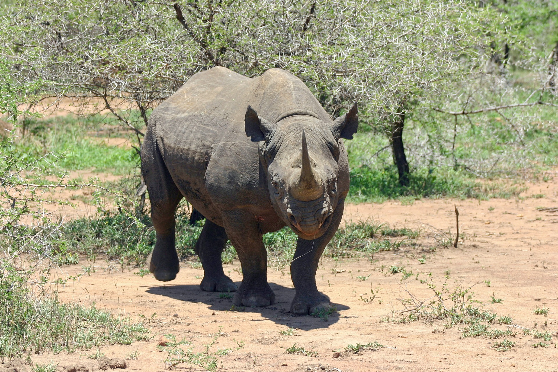 Black Rhino supported by Rhino The Game