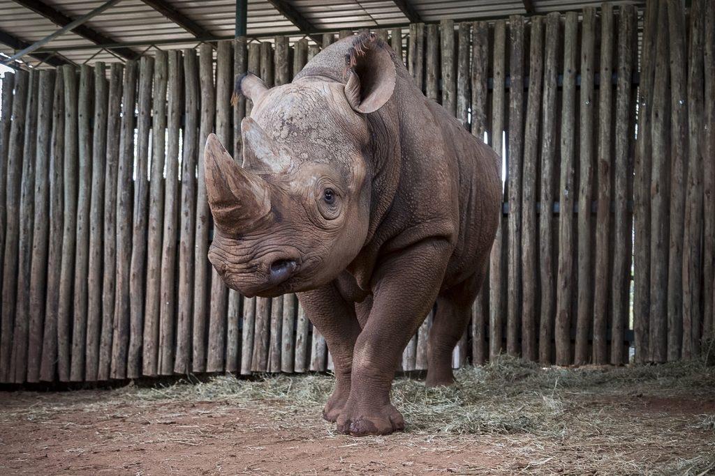 RhinoEric_002_Med-1024x683 (2).jpeg