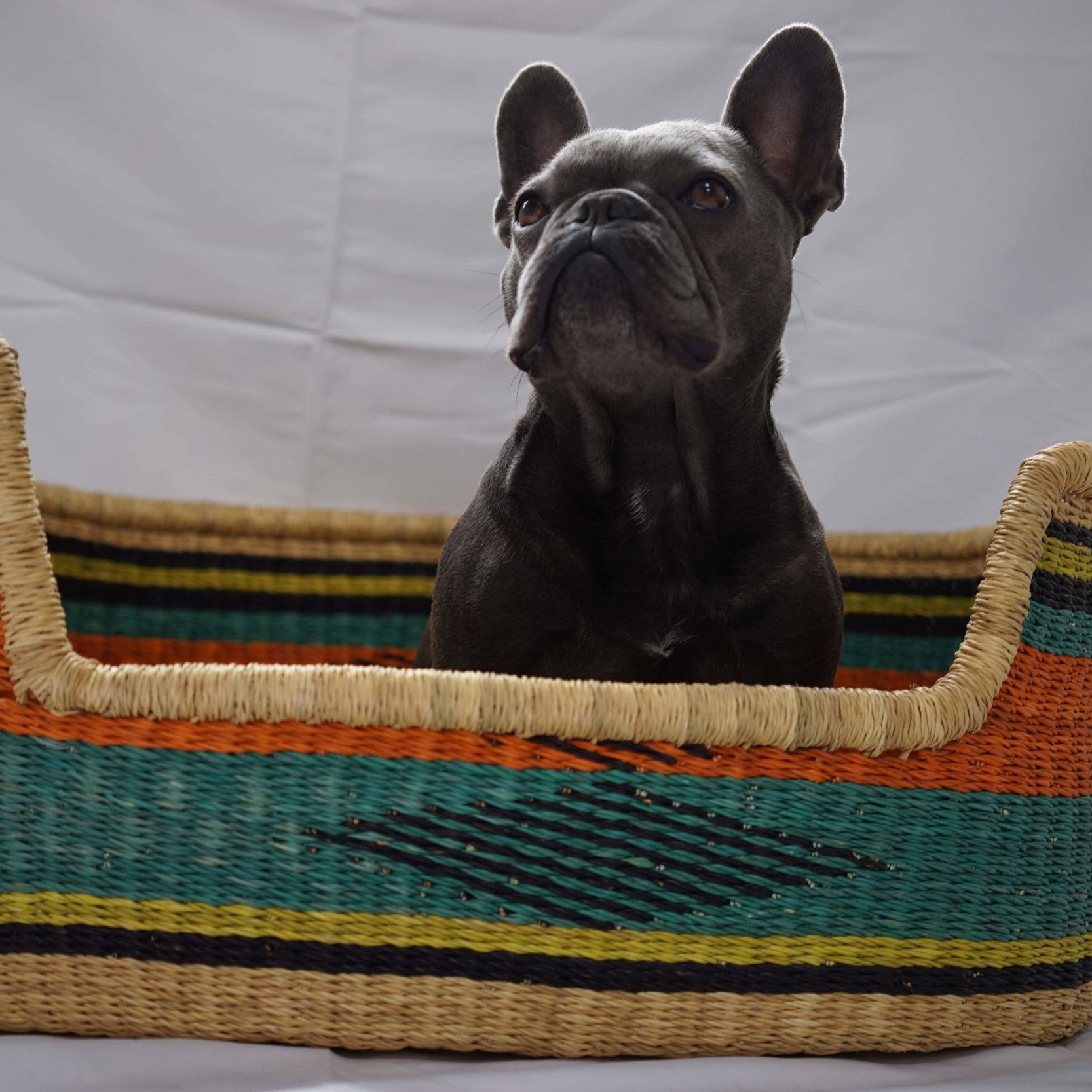 ISSA DOG BASKET- LARGESize: 76cm x 50cm x 28cm Approx - £140