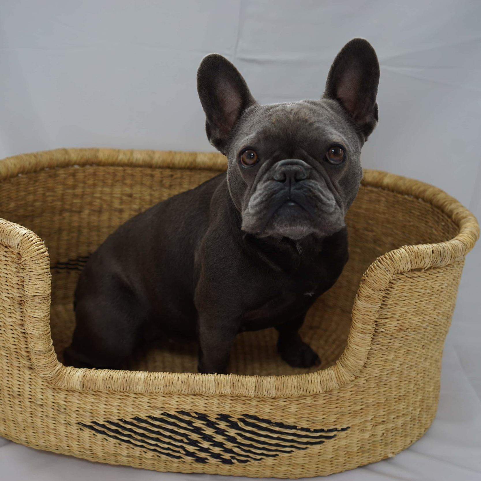 BEAU DOG BASKET - SMALLSize: 60cm x 42cm x 26cm Approx - £120