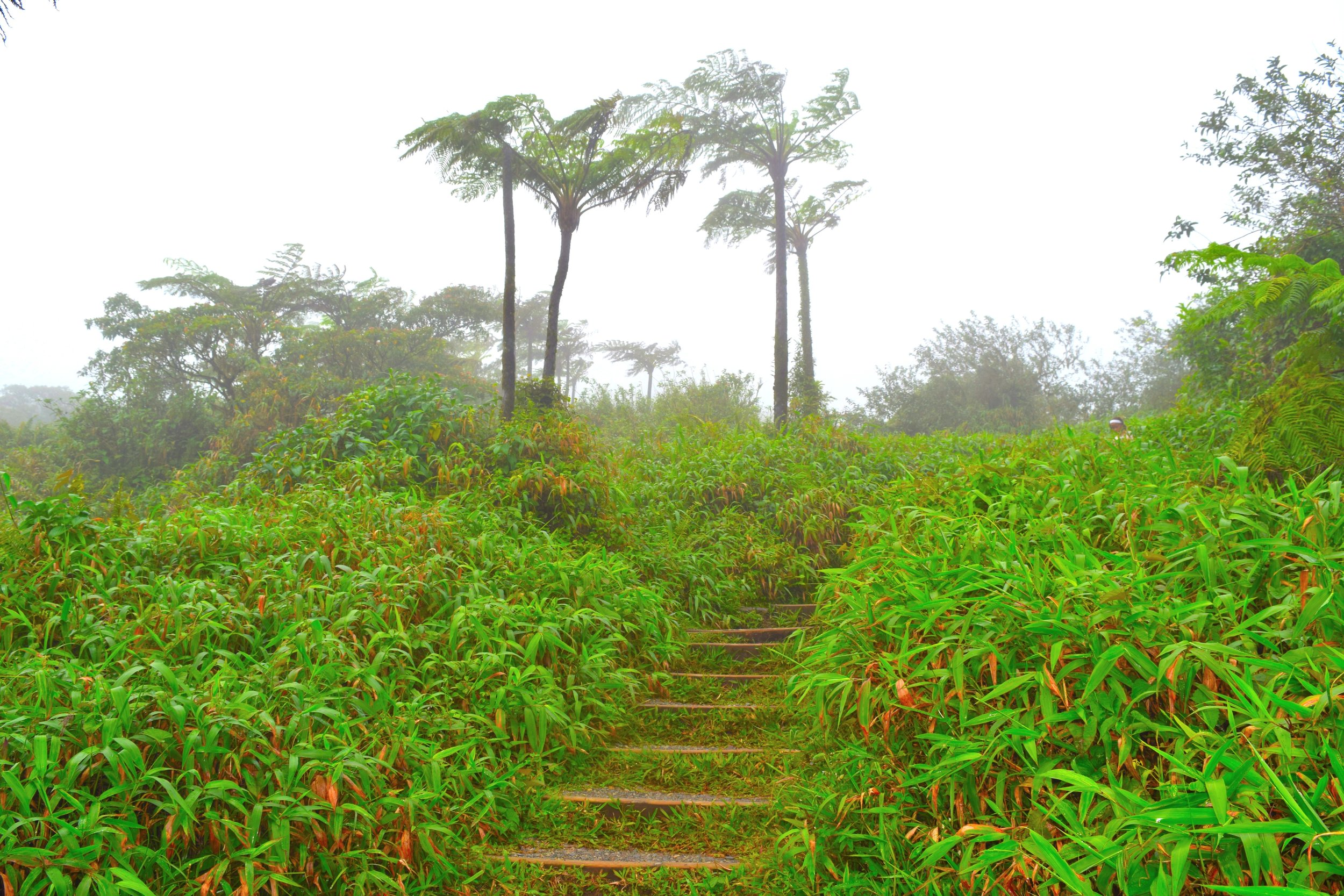 Stairway to the top of Mt. Peele, Martinique.