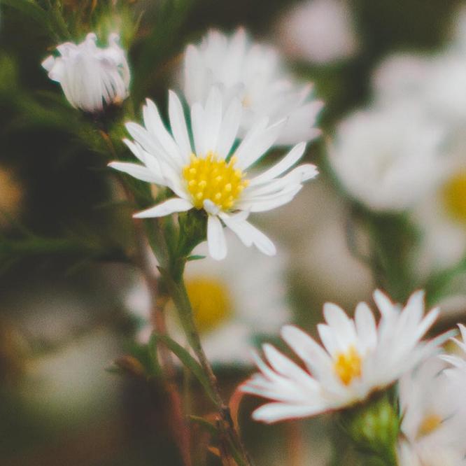 Flower Essences and Aromatherapy