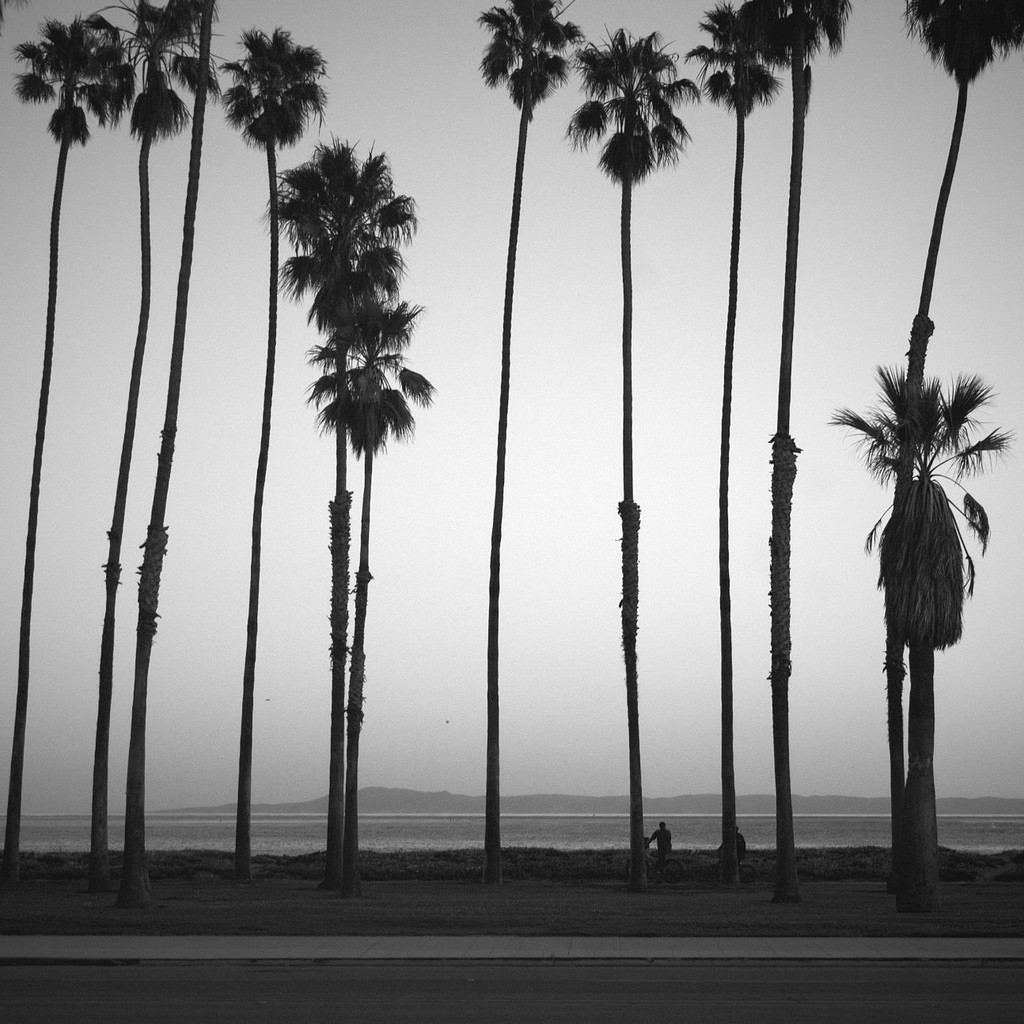 palm-trees-tumblr-black-and-white-design-decor-3-1024x1024.jpg