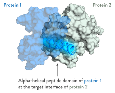 Alpha+Helical+Peptide.png