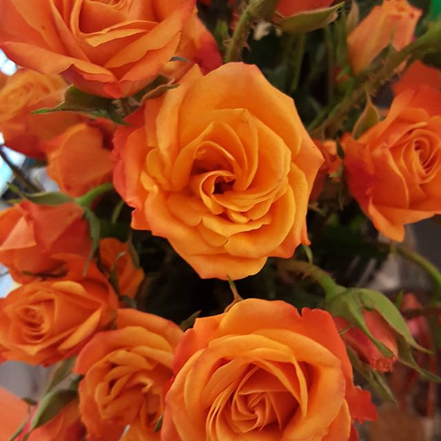 So thrilled to arrive to work today to find bright orange roses!