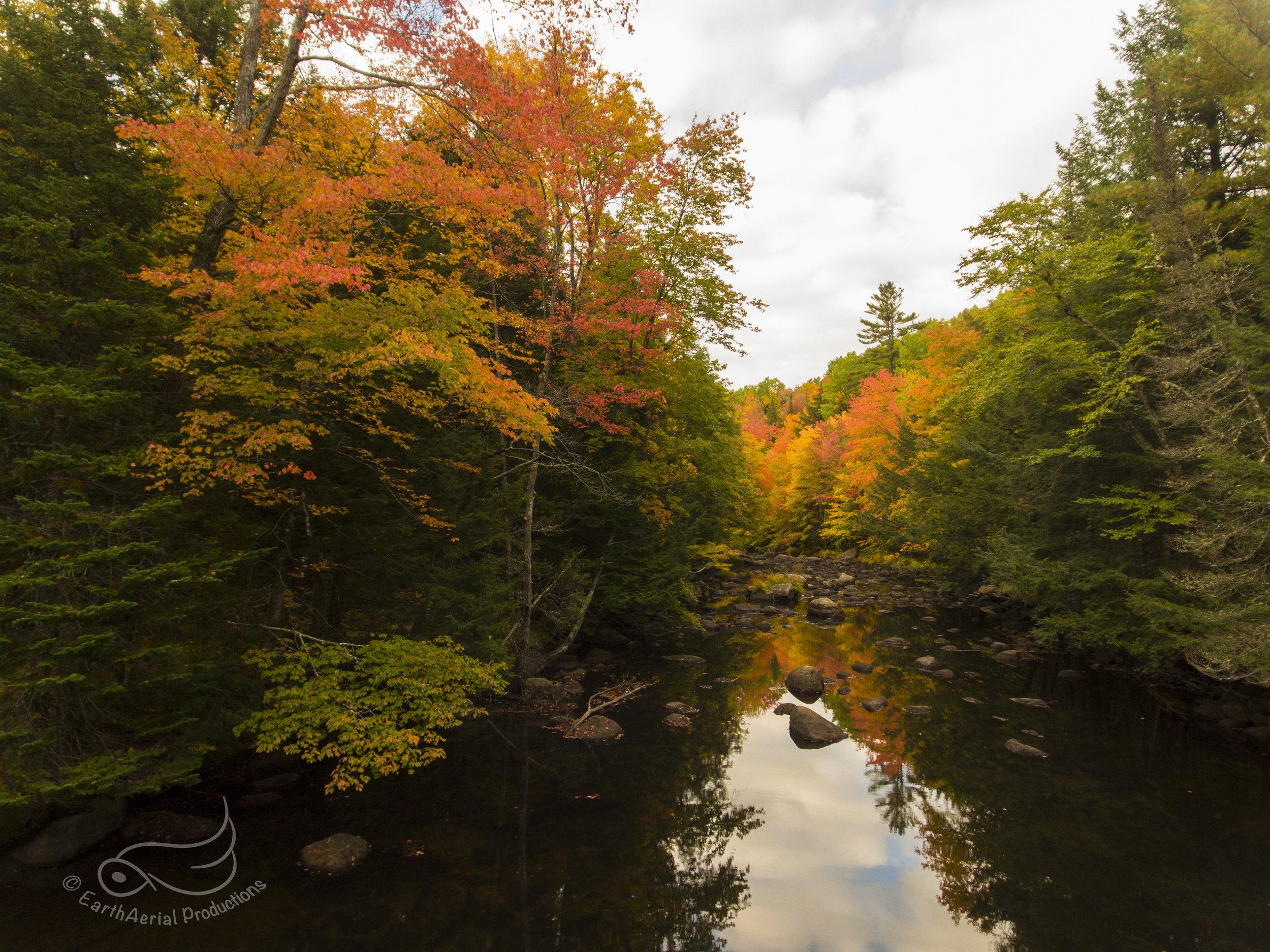 SmithRiverFoliage1 copy.jpg