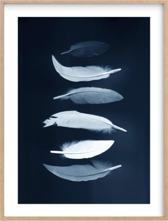 indigo-feathers.jpg