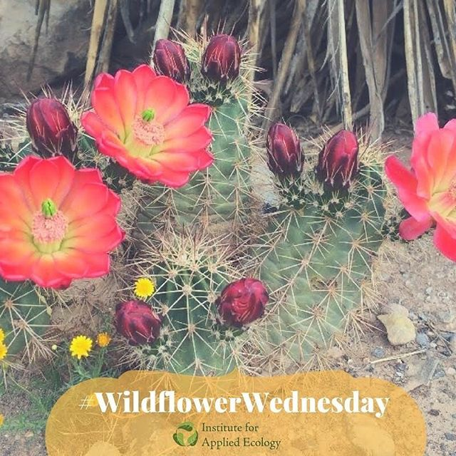 #wildflowerwednesday