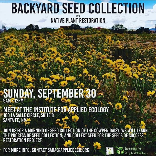 Please join us next Sunday, September 30th, at our office in Santa Fe for a day of seed collection! . We are partnering with the New Mexico Native Plant Society to collect cowpen daisy - Verbesinia enceloides - for restoration projects with the Southwest Seed Partnership and seed banking with the National Seeds of Success project. . We will cover seed collection techniques, seed processing, and how we will use the seed for restoration projects. . We hope to see you there! . Please email victoria@appliedeco.org if you have any questions.