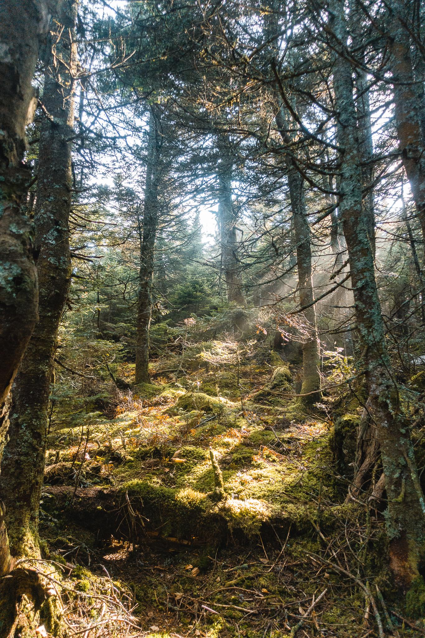 The Long Trail Gallery-39.jpg