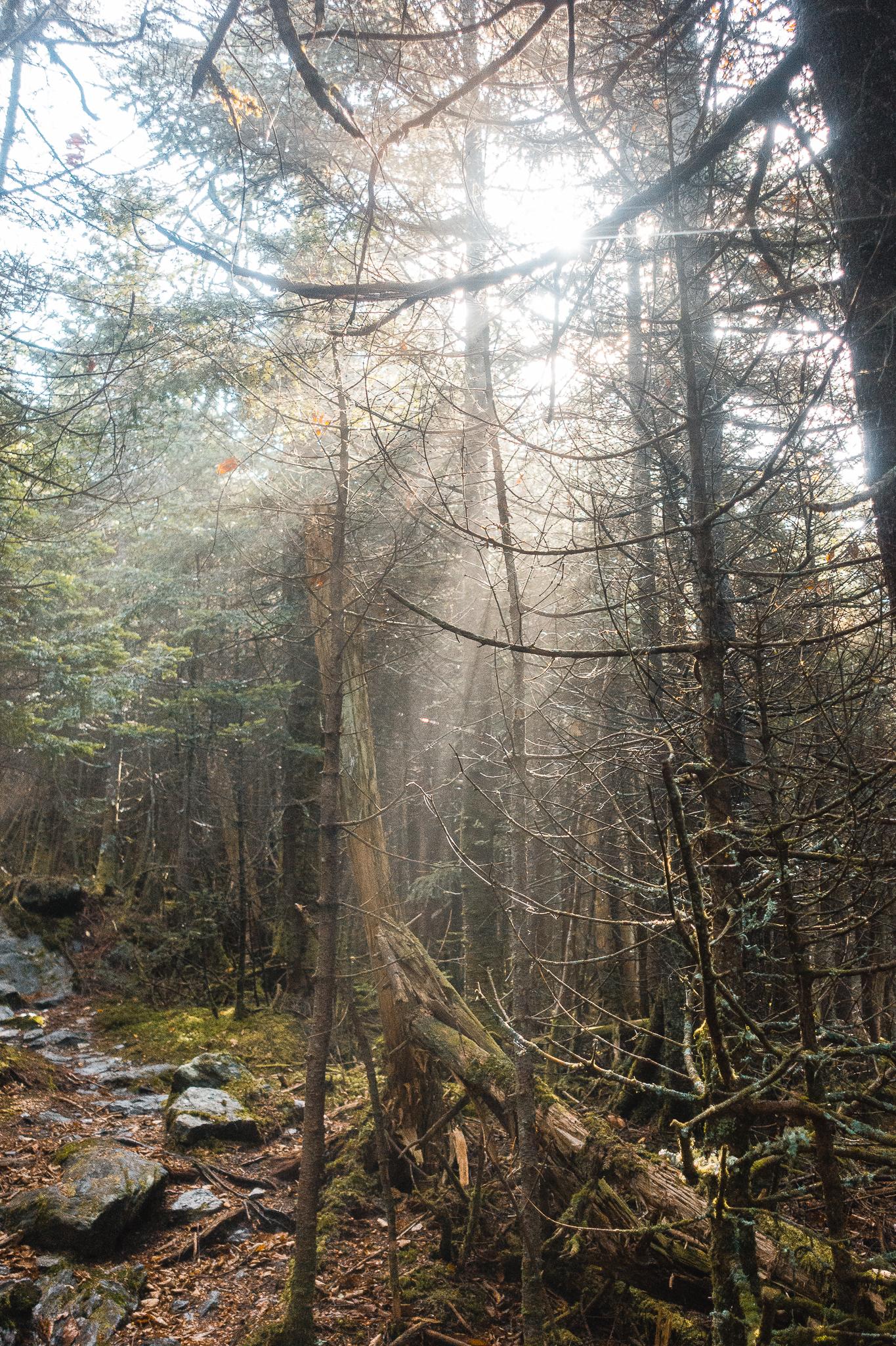The Long Trail Gallery-40.jpg