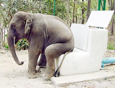 Elephant poop.jpg