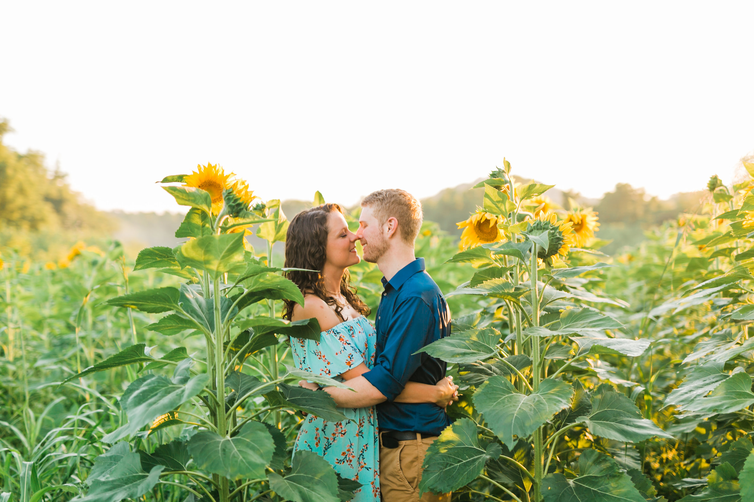 knoxville sunflower field engagement session forks in the river