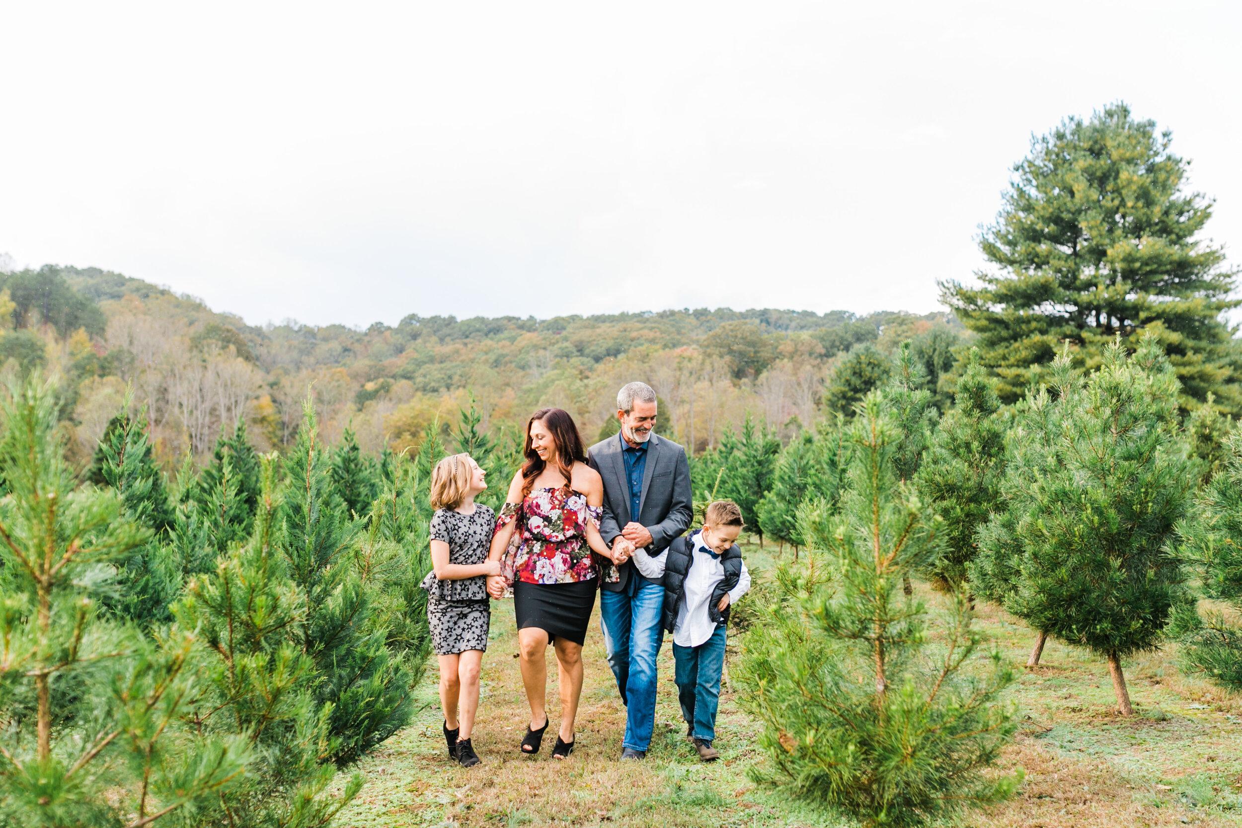 bluebird Christmas tree farm knoxville