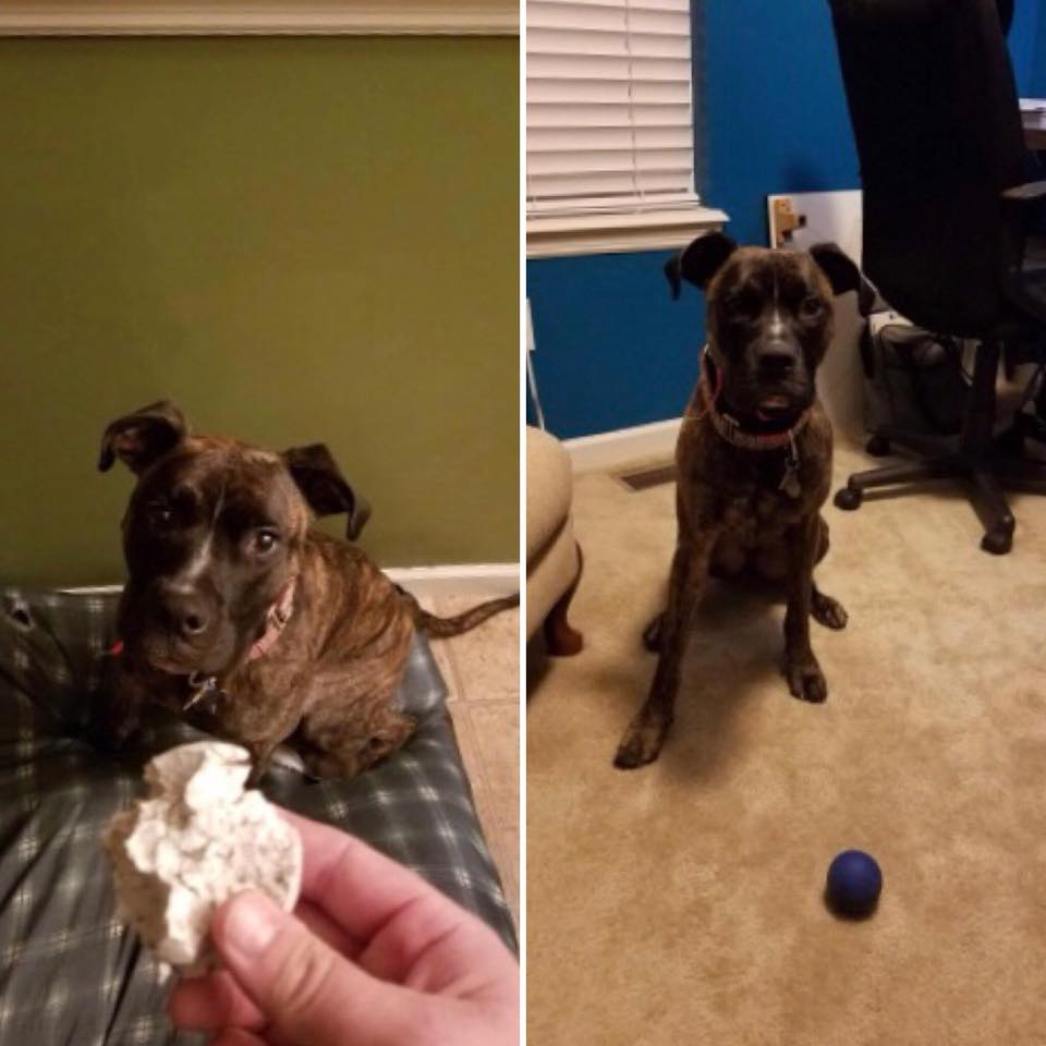Archer can do some serious damage on inferior balls (left), but the K9X Ball is holding strong!