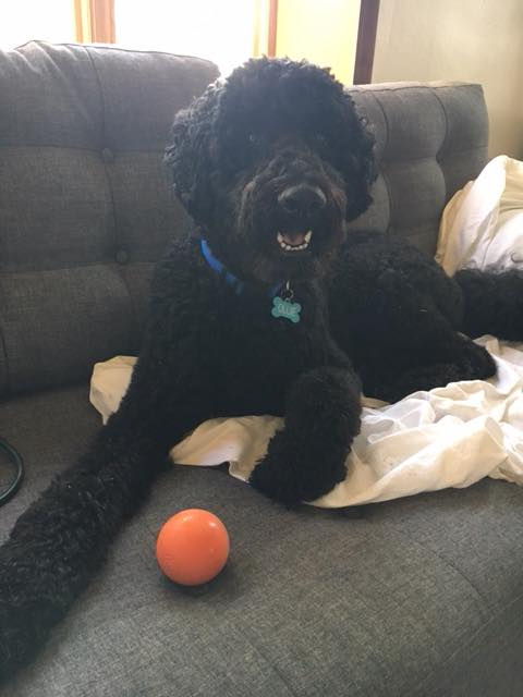 Ollie is a big fan of fetch. She loves the best bouncing ball out there!