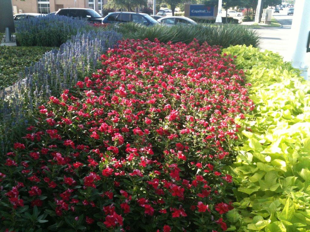color contrast flower beds