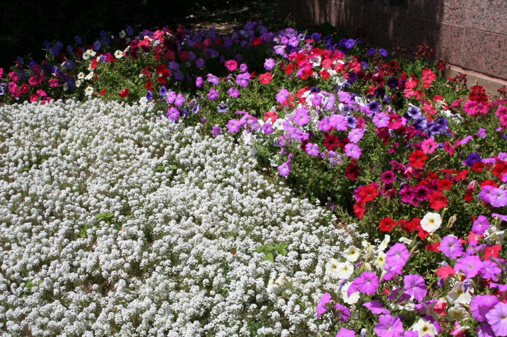 seasonal color beds at professional building entry