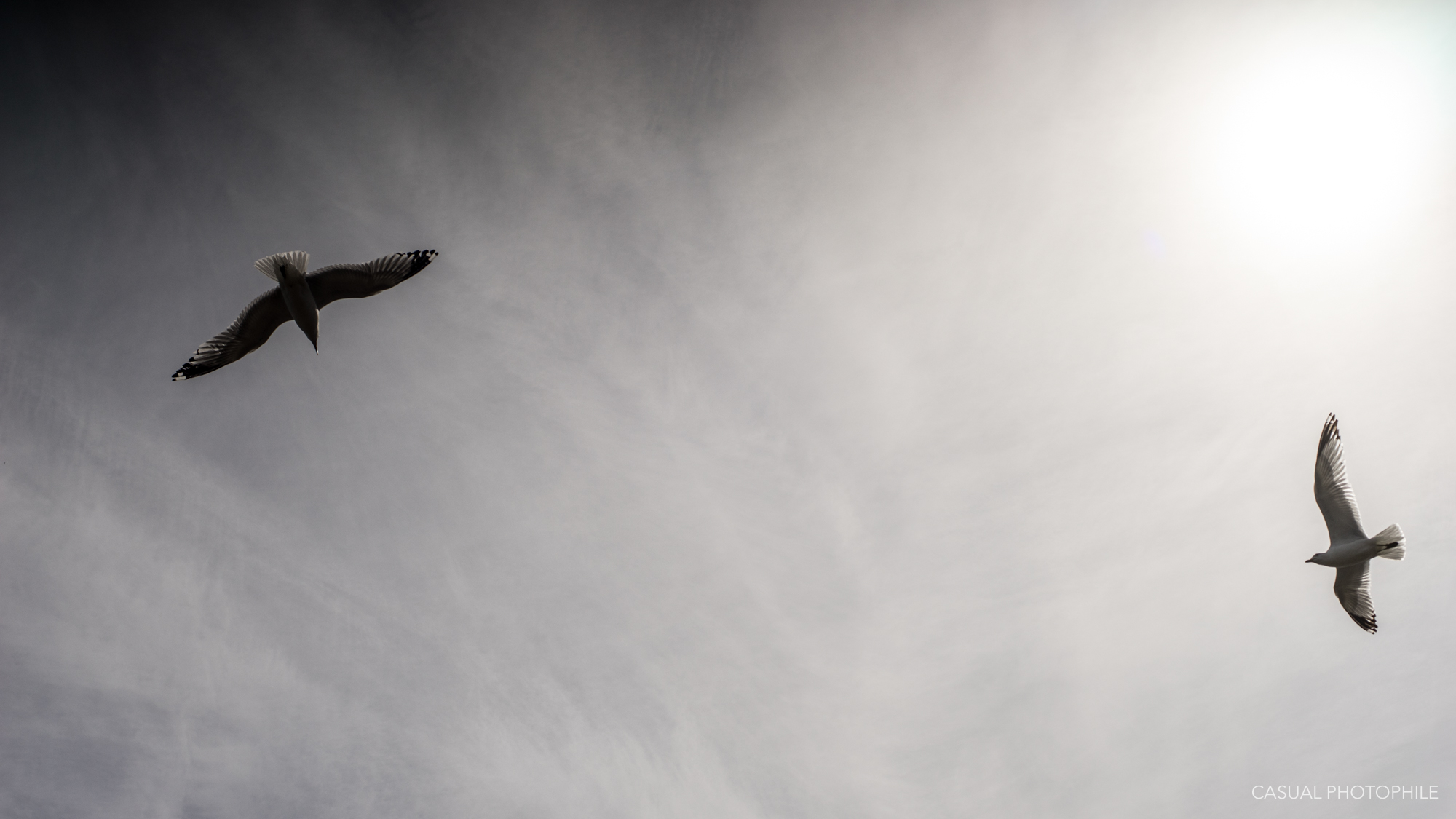 Zeiss Planar 50mm 1.4 c-y mount review-13.jpg