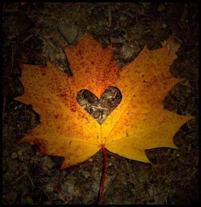 35717-Autumn-Leaf-Heart.jpg