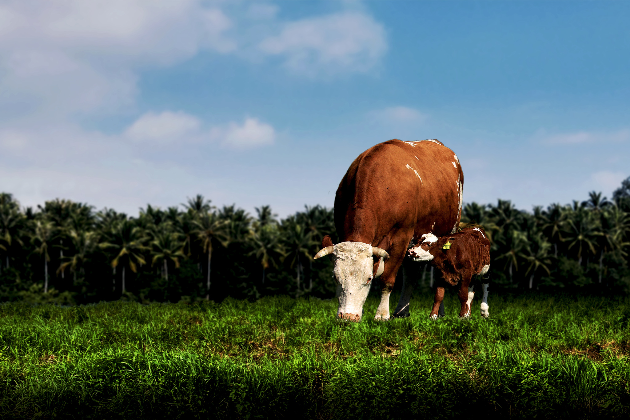 Beautiful ground and cows1.jpg