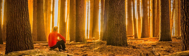 ... always seeking the light.