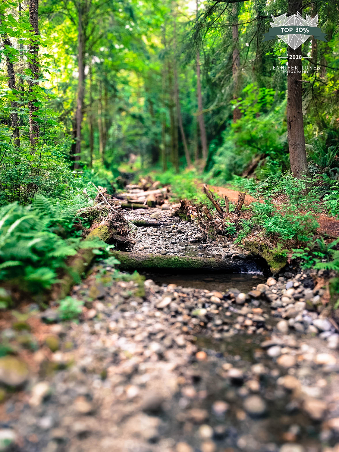 Top 30% award for phone photography of a Bellevue City Maintained Trail.
