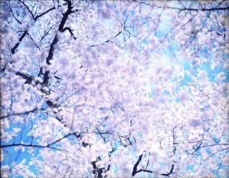 Risaku Suzuki, Sakura N-6, 2002.jpg