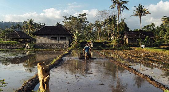 Smallholder Farmer