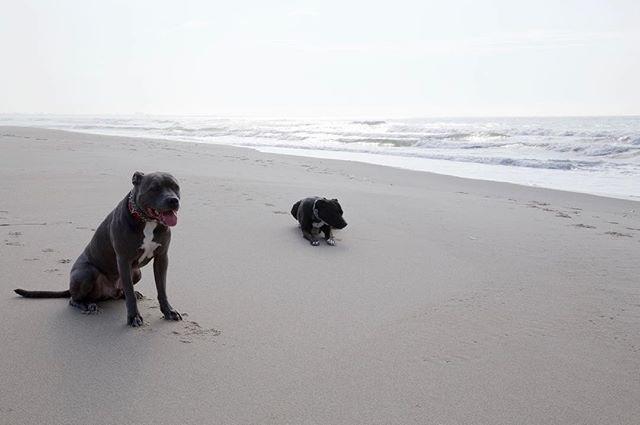 Viva Summer🤙🏼🤙🏾🤙🏿 #velvethippo #rockawaybeach #beachdogs