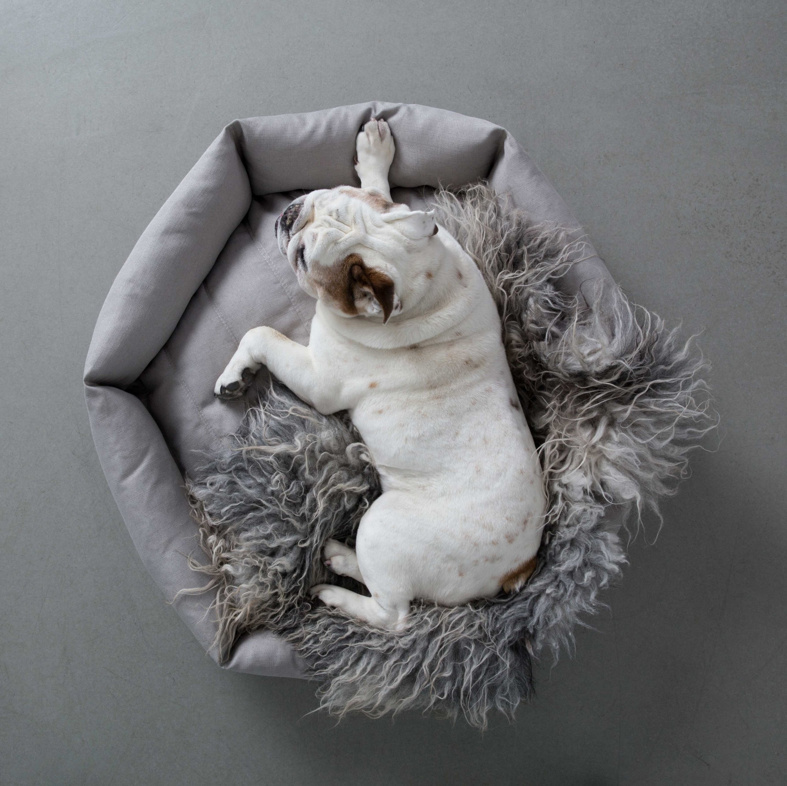 FInley in our hex cushion