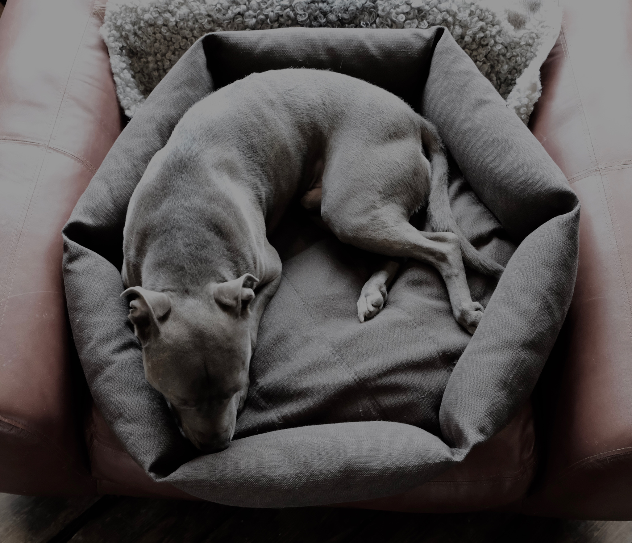grey days are for napping