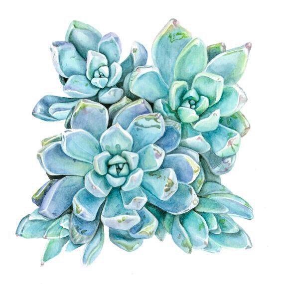 succulent watercolor.jpg